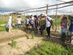 Trường THCS Nguyễn Du tổ chức tham quan vườn rau hữu cơ xã Cẩm Thanh